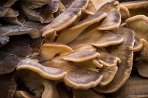 Mushroom Empire
