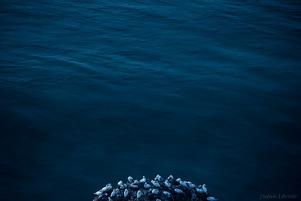 The Birds Island