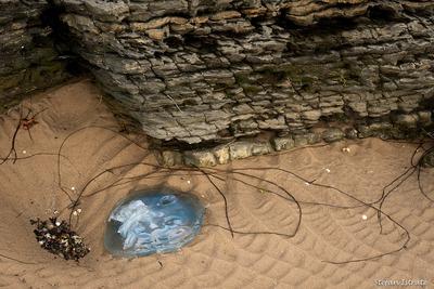 Treasures at Low Tide