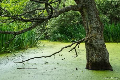 Urban Swamp