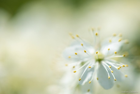 Wildflower in Bloom